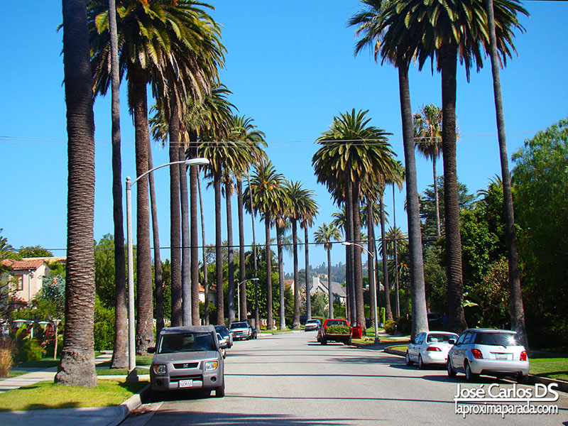 Palmeras Beverly Hills Los Angeles