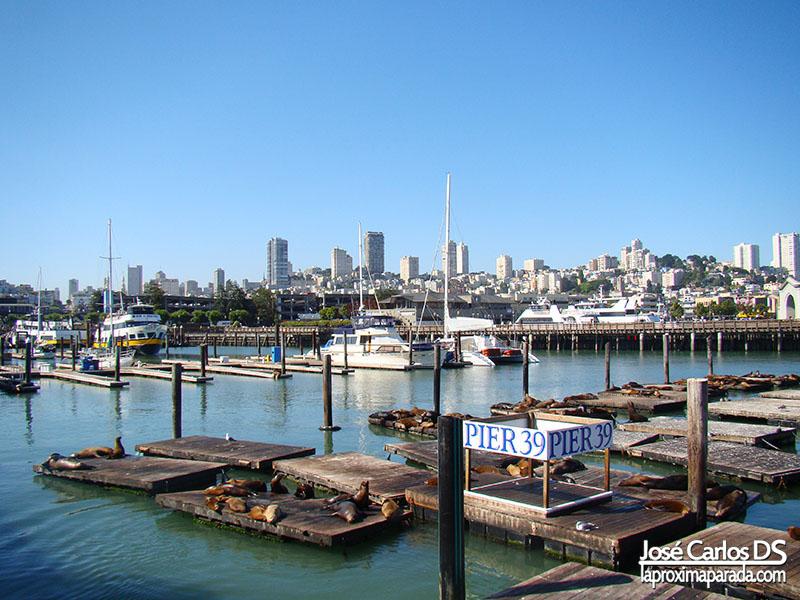 Pier 39 Leones Marinos San Francisco