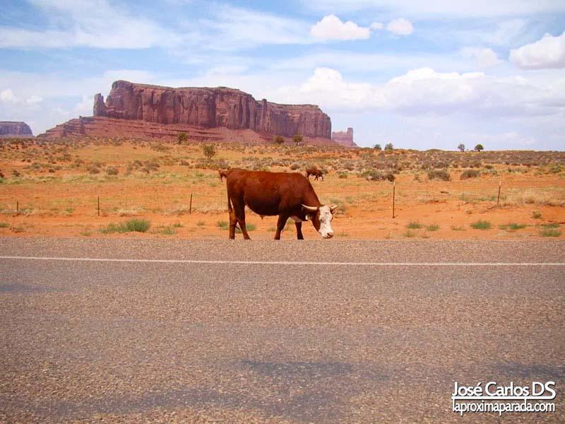 Vaca Monument Valley Utah