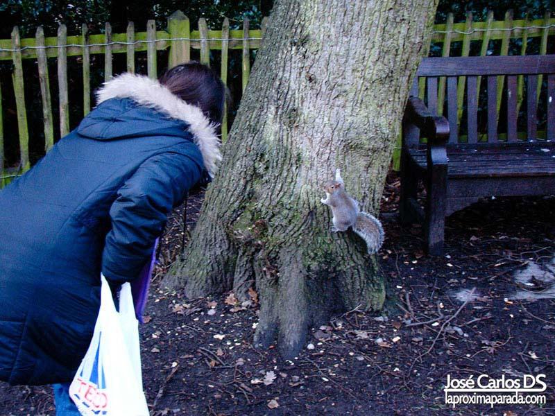 Ardilla Holland Gardens Londres