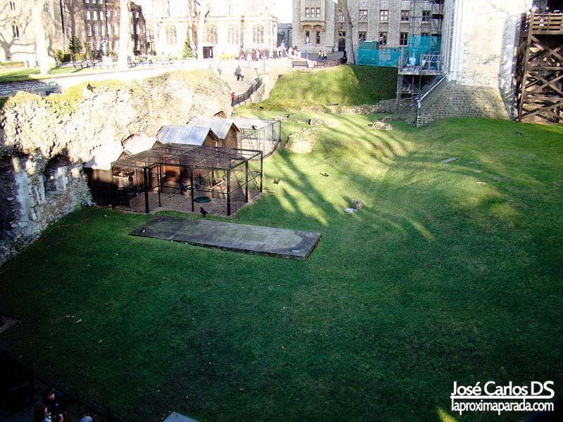 Cuervos Torre de Londres