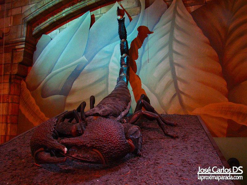 Escorpión Museo de Historia Natural Londres