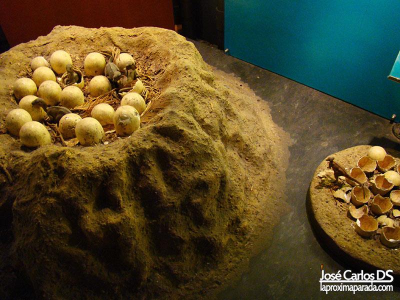 Huevos Dinosaurios Museo Historia Londres