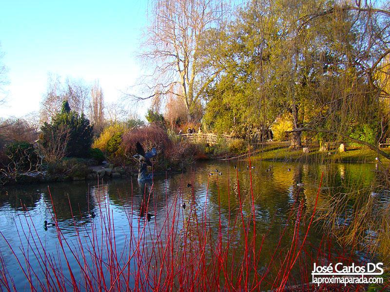 Lago Regent´s Park Londres