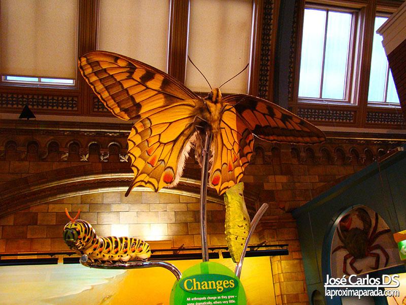 Mariposa Museo de Historia Natural Londres