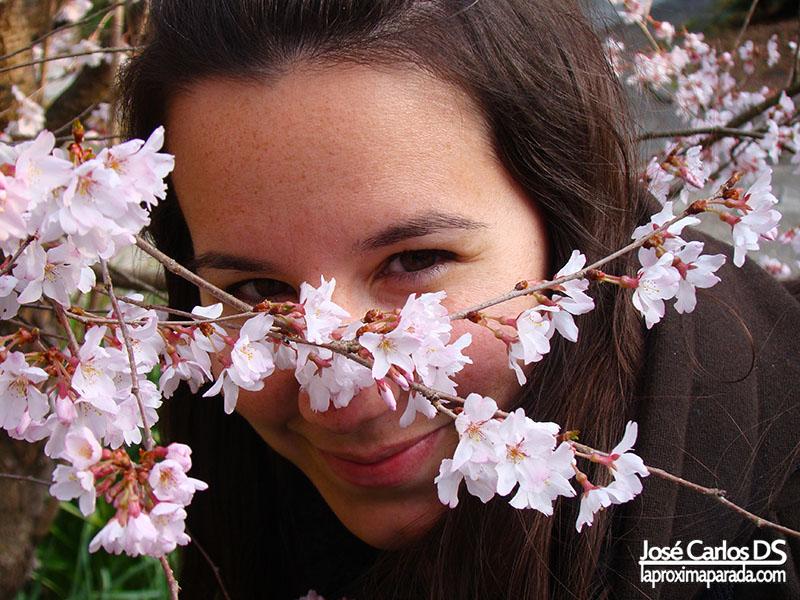 Flores de Sakura en Kyoto