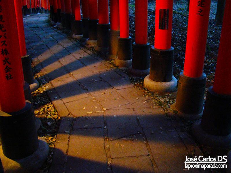 Torii noche en Fushimi Inari