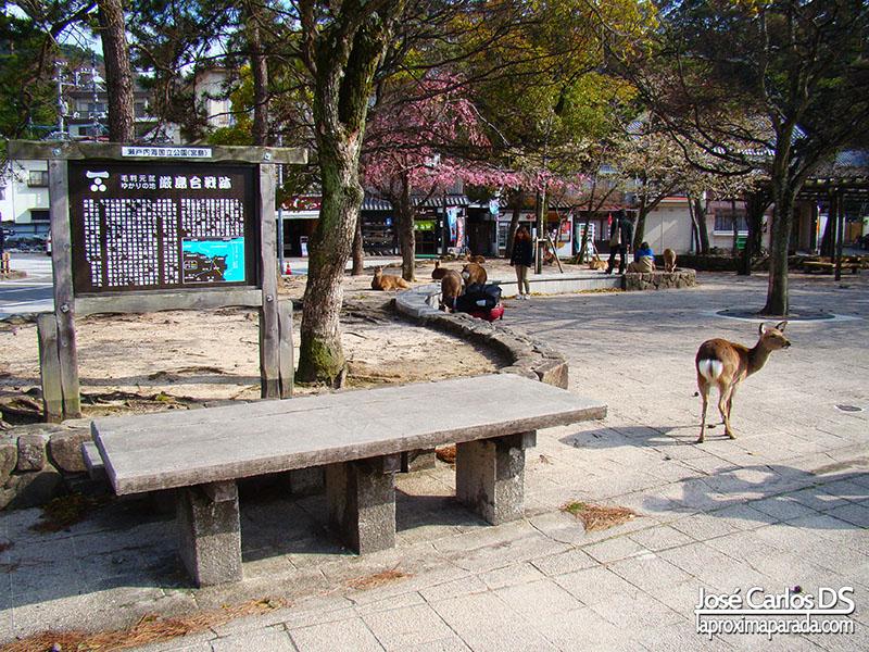 Ciervos en Miyajima