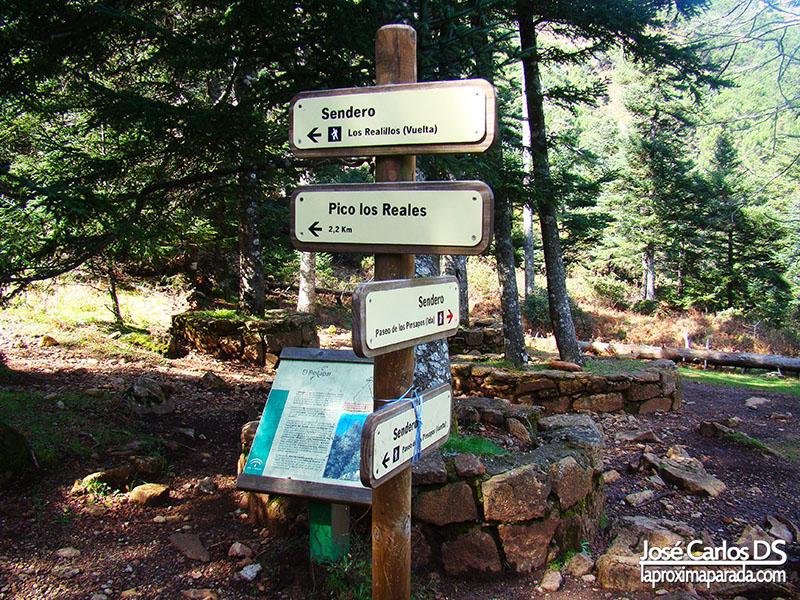 Paseo de los Pinsapos a Realillos