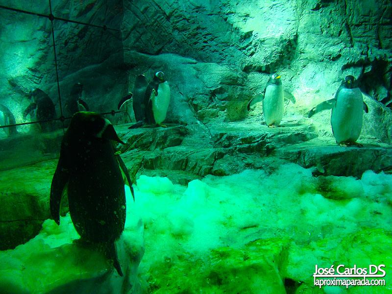 Pingüinos Acuario de Osaka