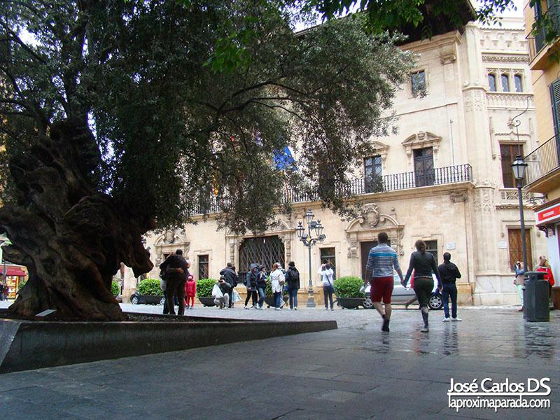 Ayuntamiento y Olivo de Palma de Mallorca