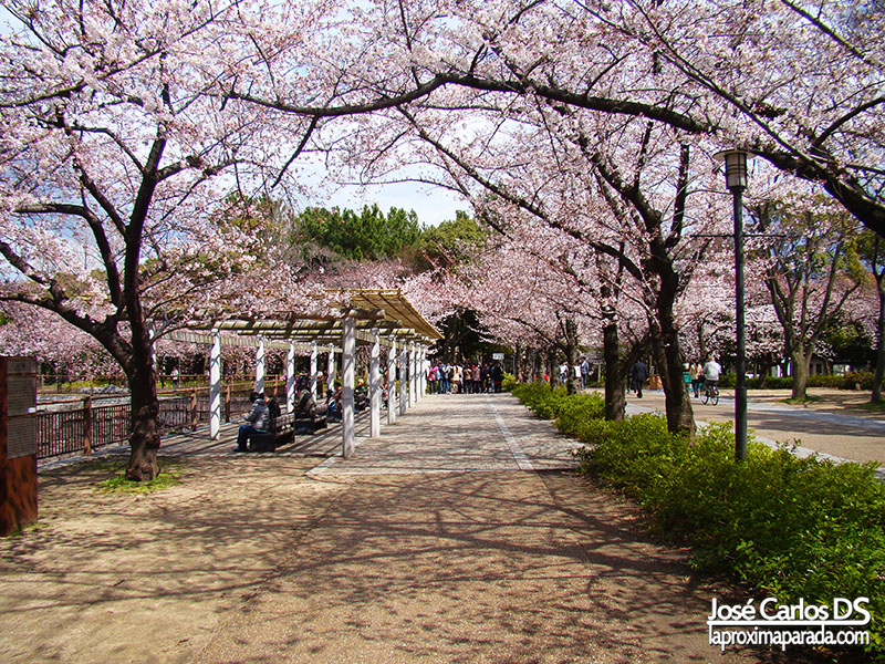 Hanami en Osaka