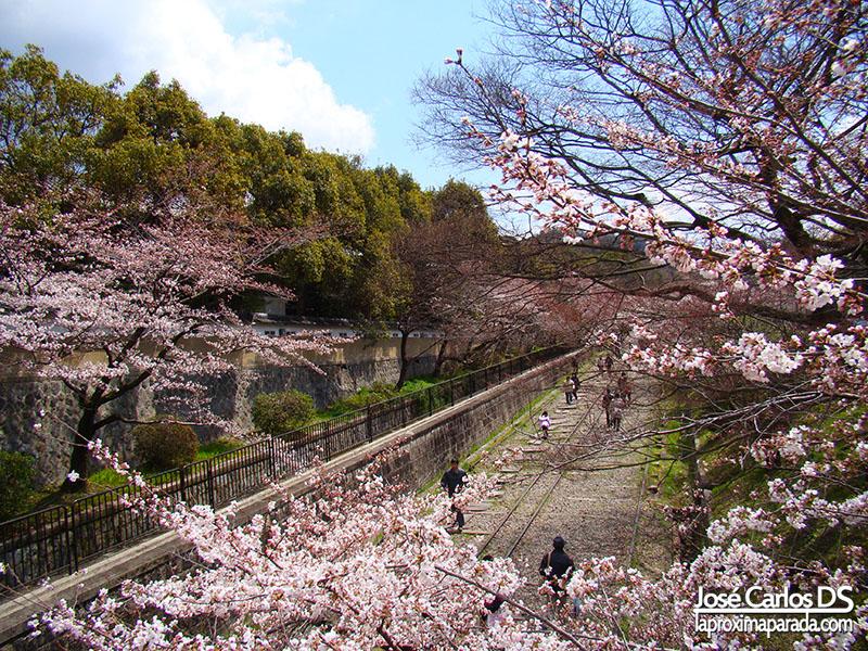 Hanami Kyoto