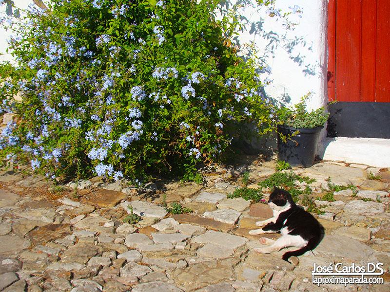Gatos en Castellar Viejo