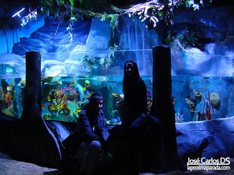 Sea Life Aquarium Puerto Marina Benalmádena)