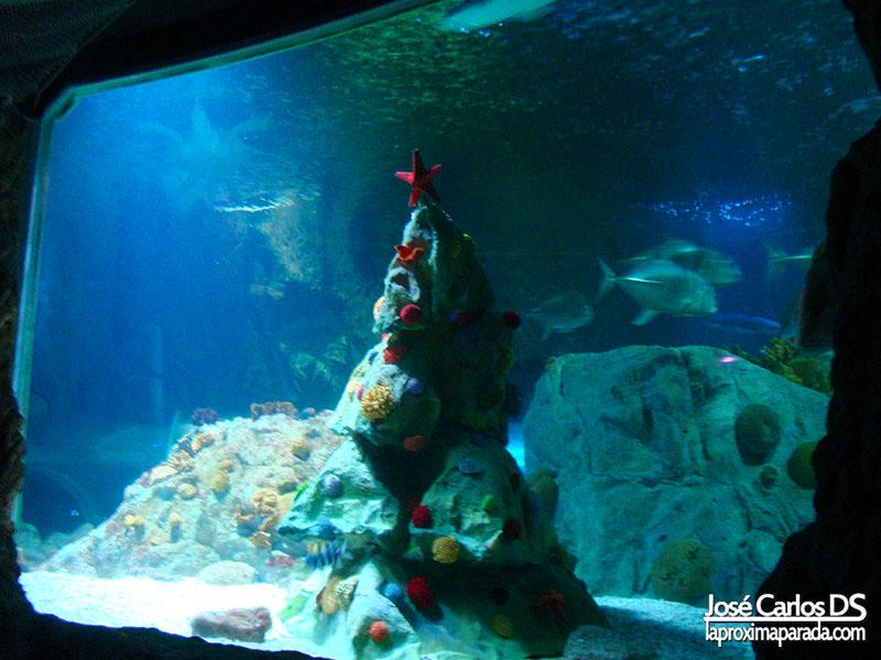 Sea Life Árbol Navidad Acuario Puerto Marina