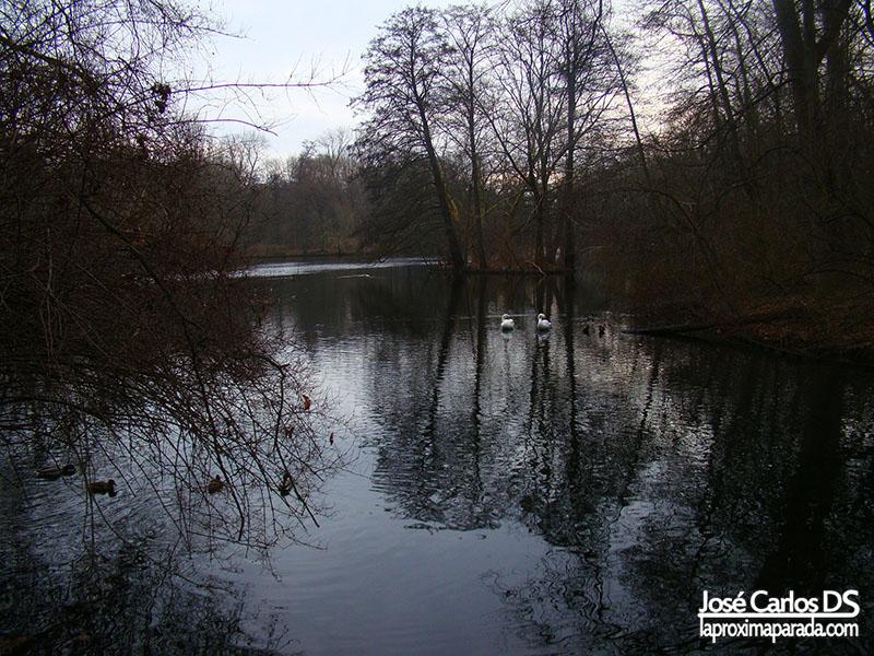 Patos Lago Tiergarten Berlin
