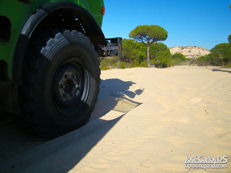 Tour Autobuses Parque Nacional de Doñana