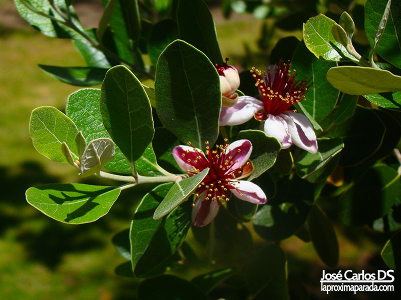 Macro Flores Parque Botánico Huelva