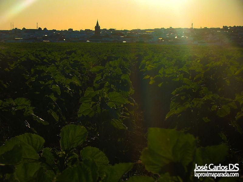 Atardecer campos de Bollullos Huelva