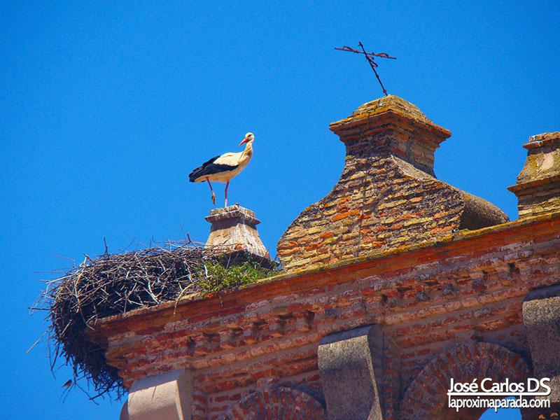 Cigüeñas Campanario Monasterio Santa Cara Moguer