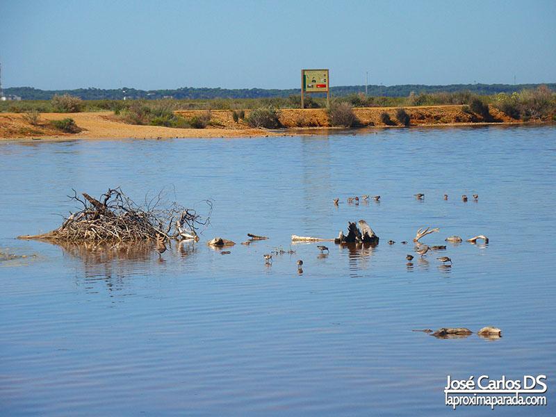 Aves Marismas de Odiel Huelva
