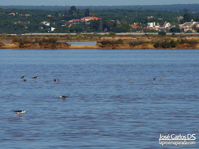Aves Marismas de Huelva
