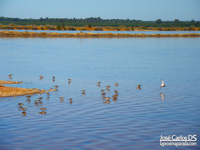 Reserva de la Biosfera Odiel Huelva
