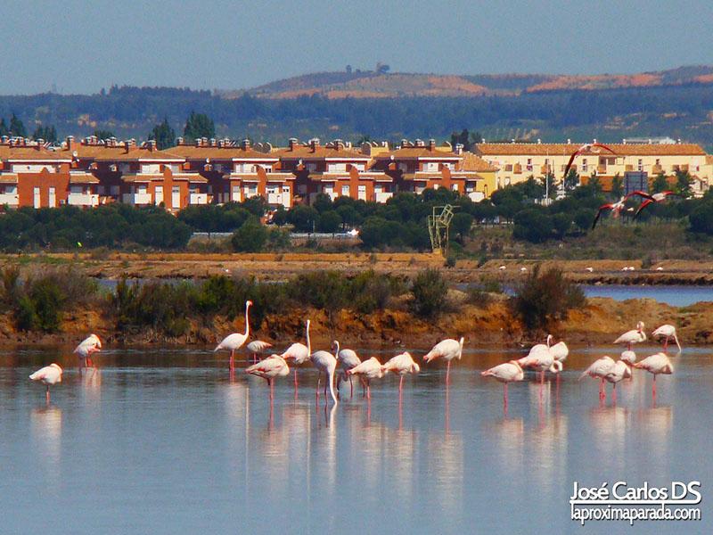 Flamencos Marismas del Odiel Huelva