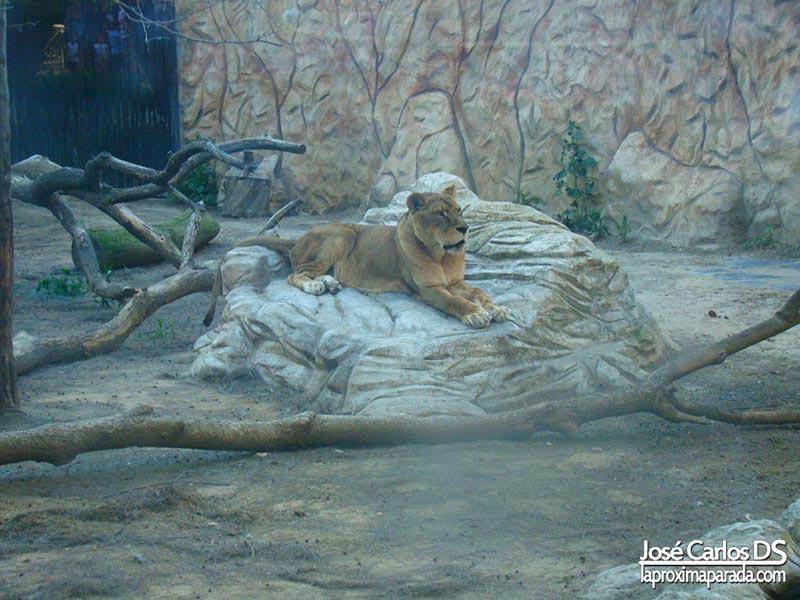 Zoológico gratuito de Ayamonte