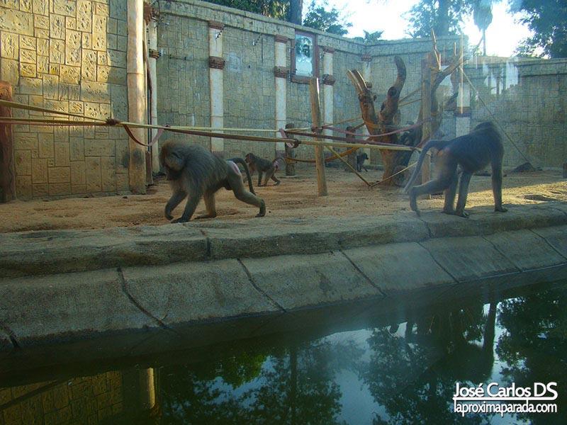 Monos Parque Municipal de Ayamonte