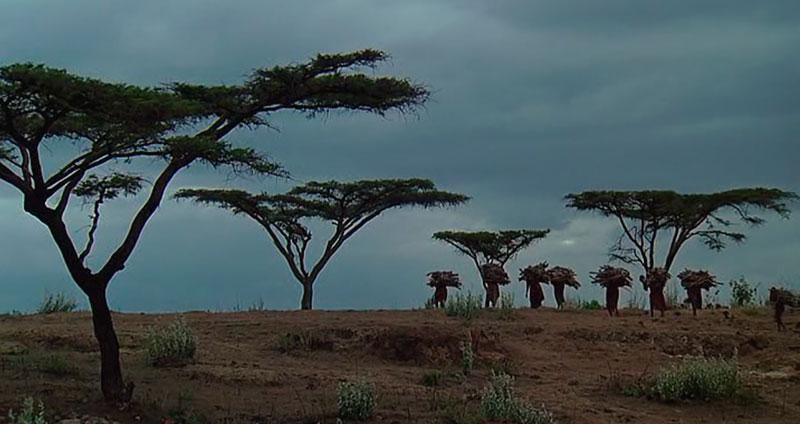 Panorámica Kenia en Memorias de África