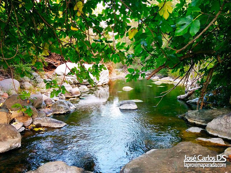 Naturaleza en río Padrón de Estepona