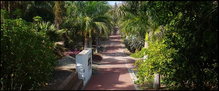 Visitar jard n bot nico la concepci n la pr xima parada for Informacion sobre el jardin botanico