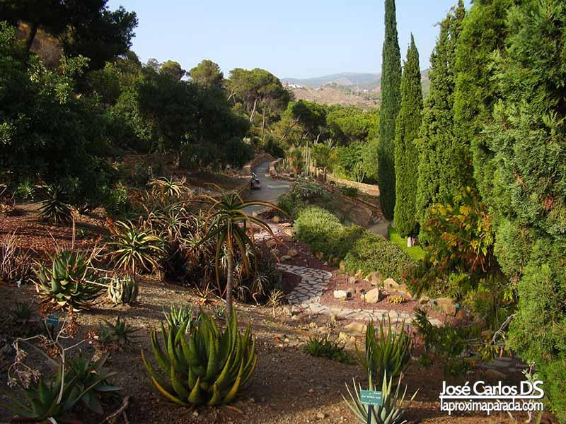 Ruta Cactus Jardín Botánico de Málaga