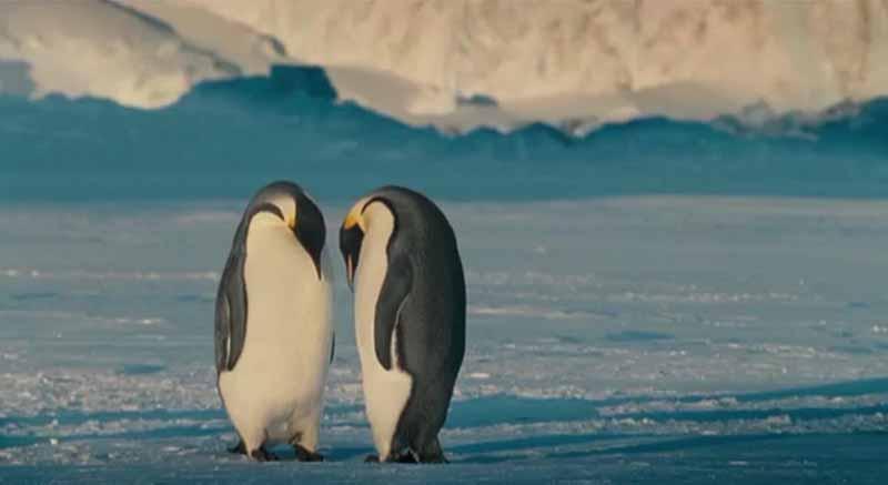 Parejas Pingüinos La Marche de l'empereur