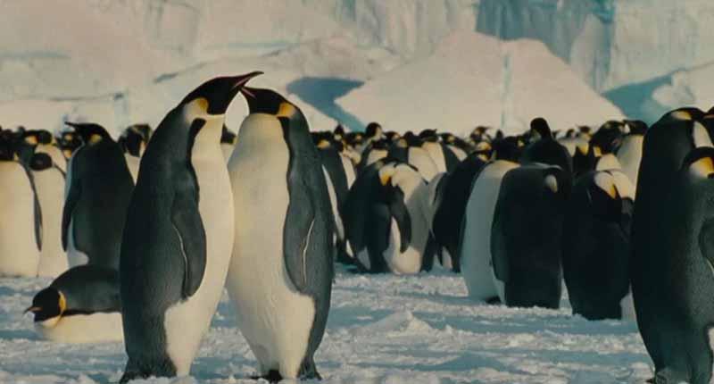 Pingüinos en La Marche de l'empereur