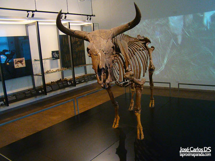 Prehistoria en Museo Nacional de Dinamarca