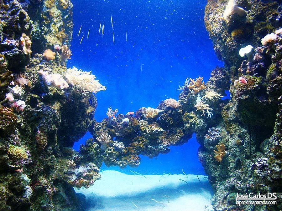Corales en Blue Planet de Copenhague