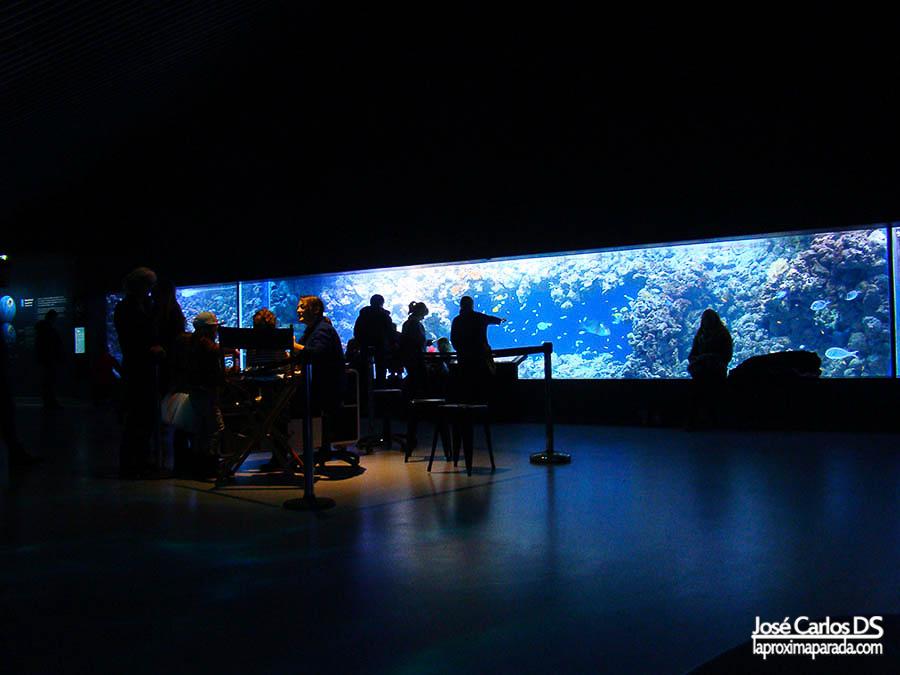 Área infantil acuario de Copenhague