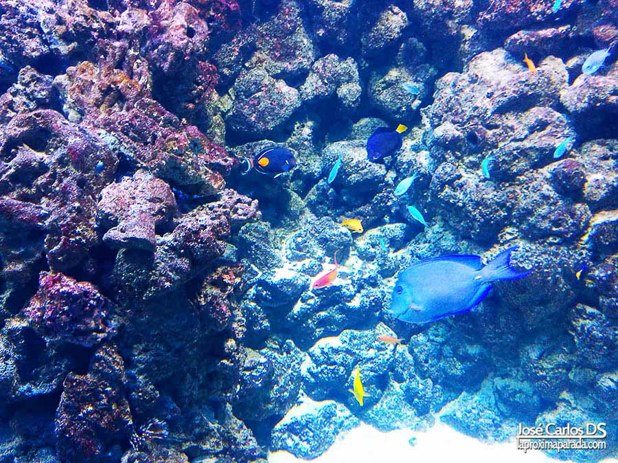 Peces tropicales en Blue Planet de Copenhague