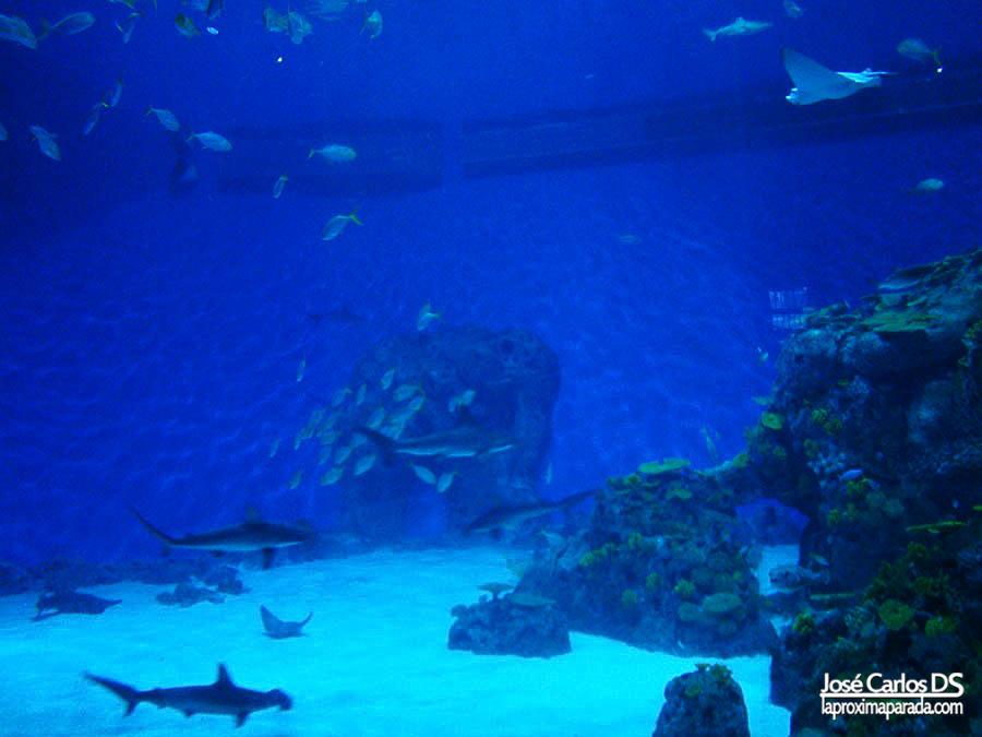 Tiburones en Planeta Azul de Copenhague